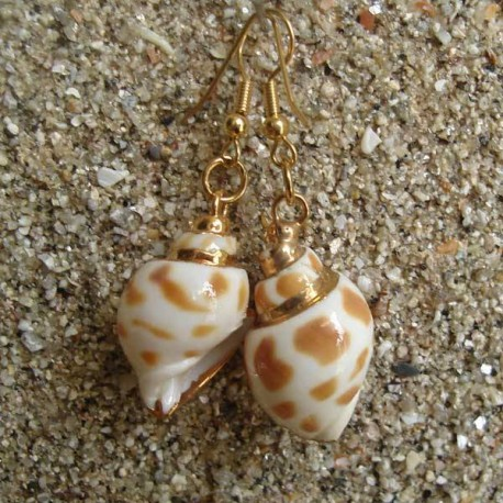 Boucles d oreilles coquillage Babylonia aerolata blanc marron bordure or