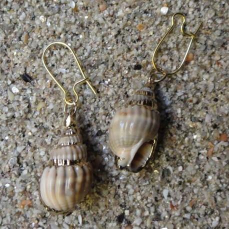 Boucles d oreilles coquillage Babylonia aerolata strié gris marron