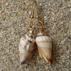 Boucles d oreilles vrai coquillage strombus blanc et marron