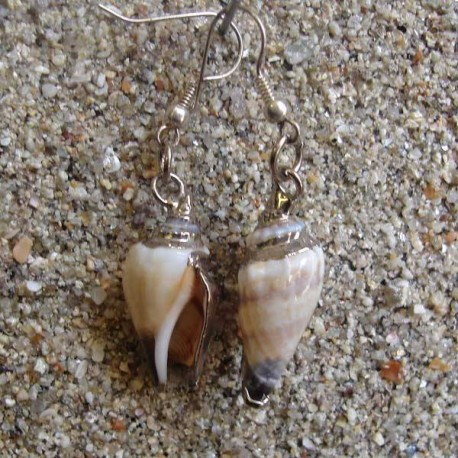 Boucles d oreilles coquillage strombus blanc et marron XS