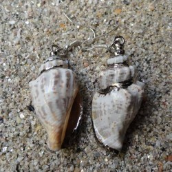 Boucles d oreilles coquillage strombus blanc et marron XL