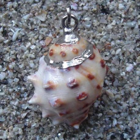 Pendentif coquillage cône saumon | collier argent 925