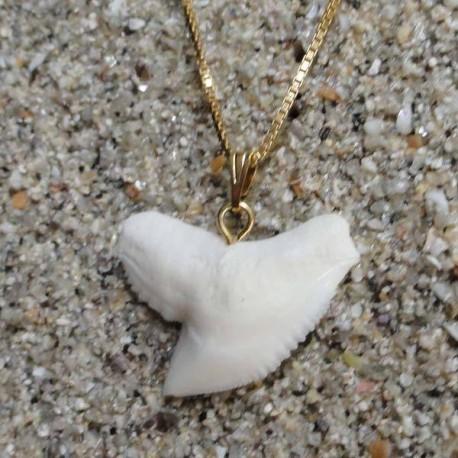 Pendentif dent de requin tigre homme , femme, de 2.5 cm