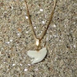 Collier plaqué or et Pendentif dent de requin tigre enfant 1 cm