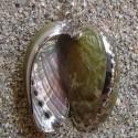 Boucles d'oreilles coquillages bordure argent