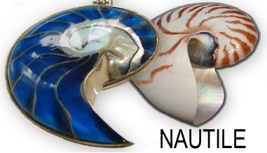 Bijoux nautile de créateurs ART des ILES